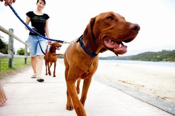 狗狗平时该训练什么?狗狗生活习惯的训练